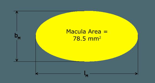Macula Sensor