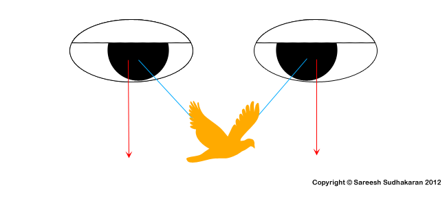 Notes by Dr. Optoglass: Stereoscopy – Convergence and Fusion
