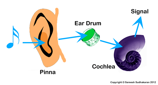 Grandma Moon Speaks: The Human Ear Part 1