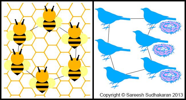 Beehive vs Bird's Nest