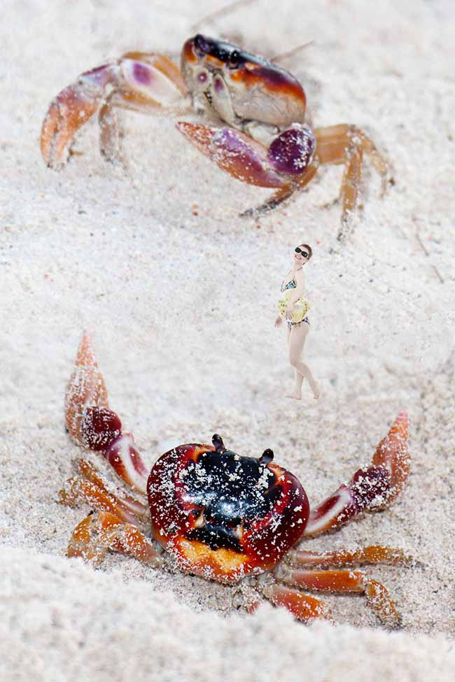 Fighting Crabs