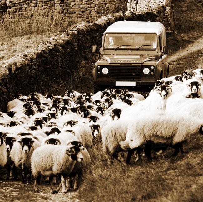 shepherd and flock of sheep