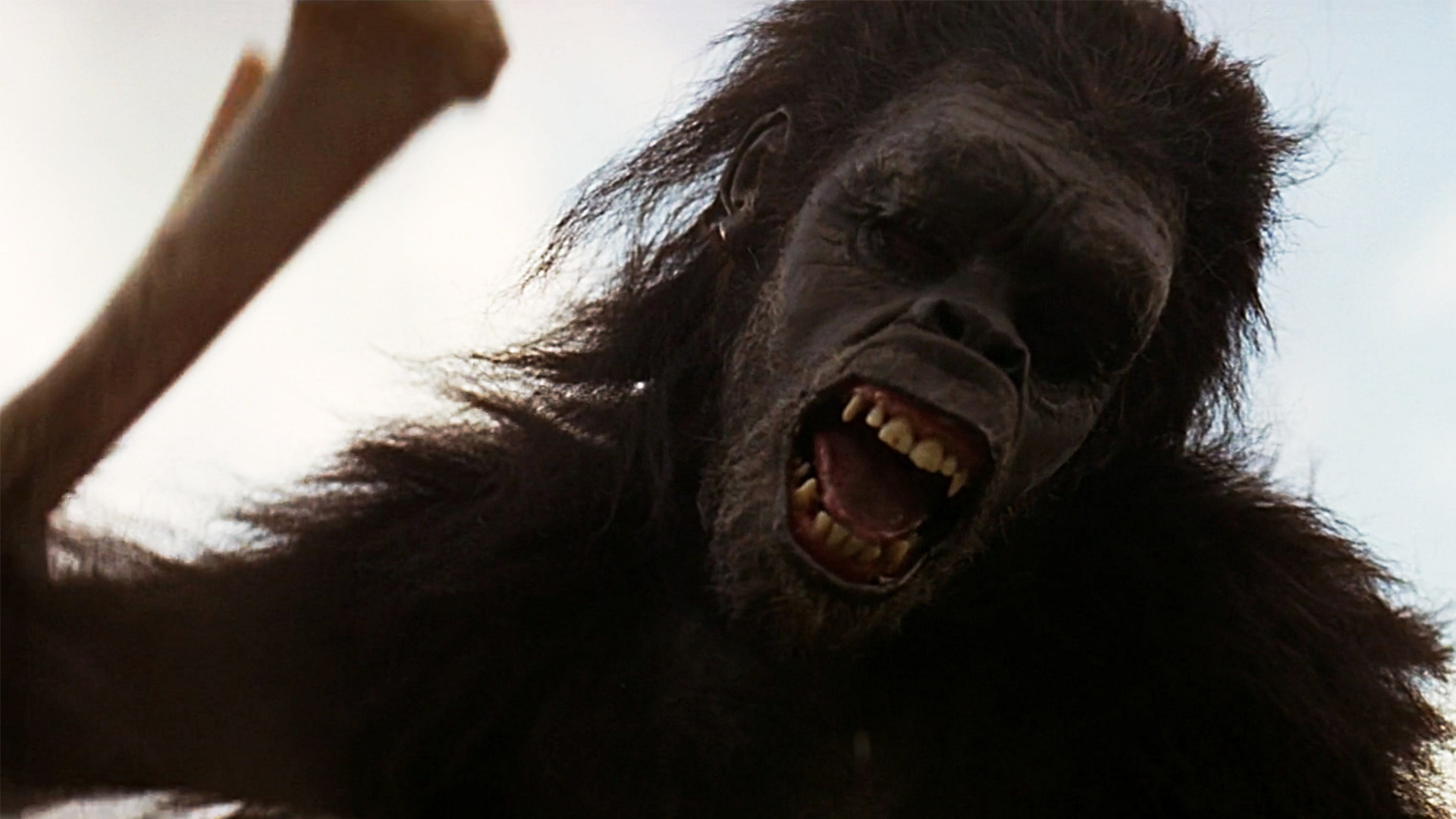 """Pure Cinema: 2001: A Space Odyssey """"Dawn of Man"""" Sequence"""